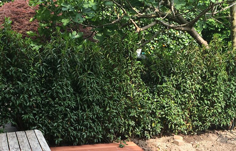 Groene Afscheiding Tuin : Tuinafscheidingen u sustuinable